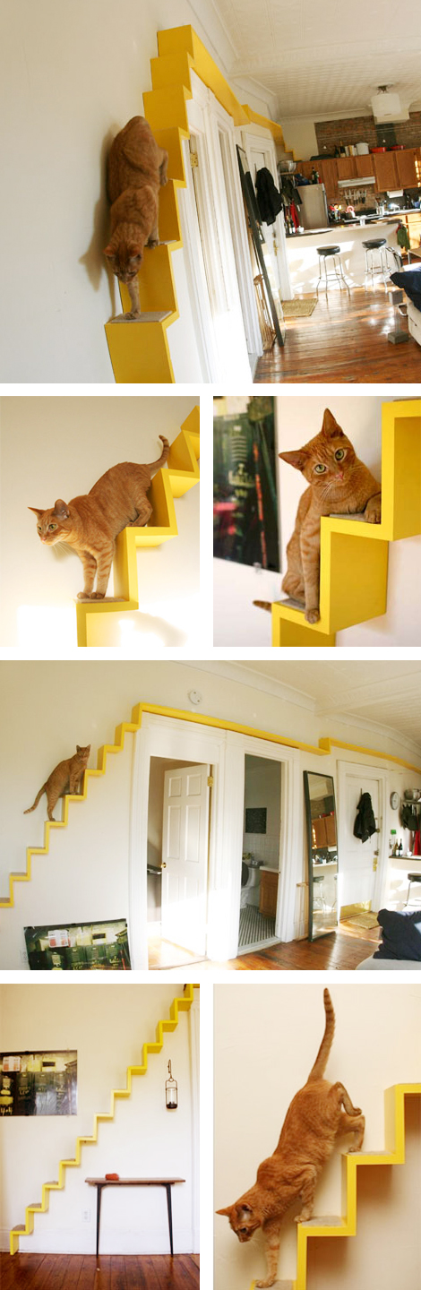 Woonblog kat trap cat stairs