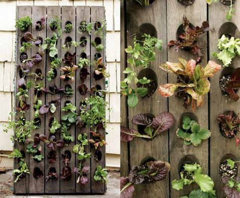Tuinieren Op Balkon : Tuinieren zonder tuin woon