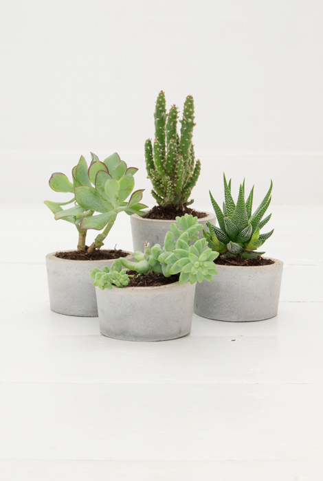 Cement-plant-pots-diy-02