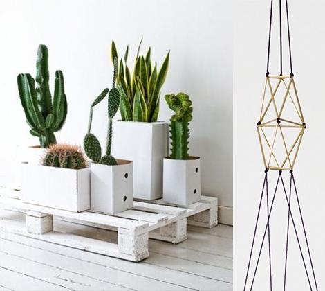 Plant cactus inspiratie