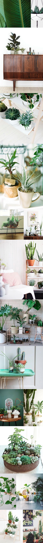 Plant-cactus-tafeltje-inspiratie