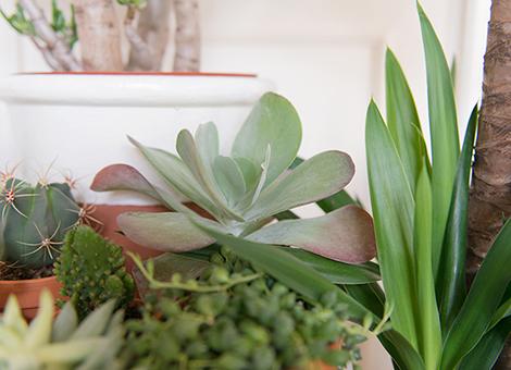 Woonblog plantenhoek cactus vetplantjes 01