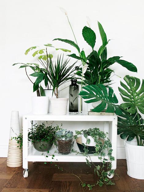 Plant-inspiratie