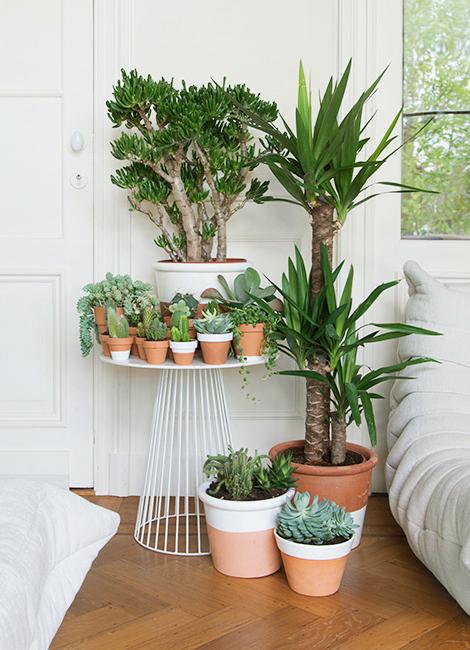 Woonblog plantenhoek cactus vetplantjes 00