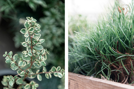 Planten-balkon-tuin-terras-stad-groen-14